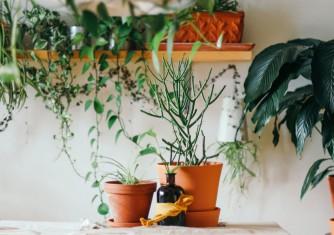 فروشگاه آنلاین گل و گیاه گلیتال | بهترین مکان نگهداری گلدان در آپارتمان