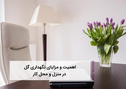 فروشگاه آنلاین گل و گیاه گلیتال | اهمیت و مزایای نگهداری گل در منزل و محل کار
