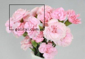 فروشگاه آنلاین گل و گیاه گلیتال | گل مناسب متولدین دی