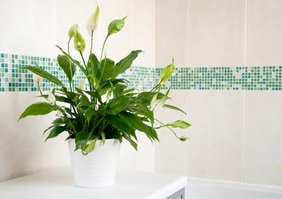 فروشگاه آنلاین گل و گیاه گلیتال | گلهای مناسب سرویس بهداشتی