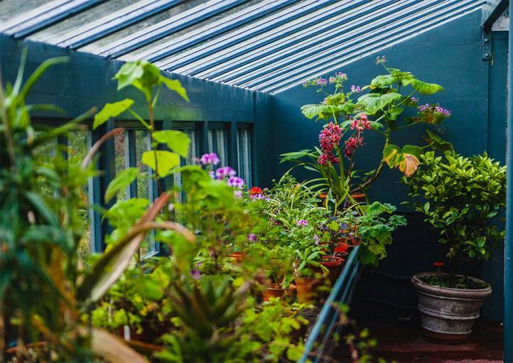 فروشگاه آنلاین گل و گیاه گلیتال | گل مناسب تراس