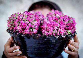فروشگاه آنلاین گل و گیاه گلیتال | تاریخچه گلاب و روش تقطیر آن