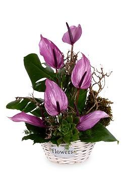 خرید سبد گل پارمیدا