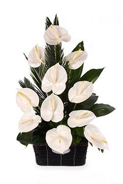 خرید سبد گل نایریکا
