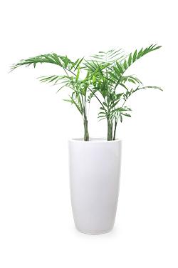 خرید گلدان شامادورا الگانس بزرگ